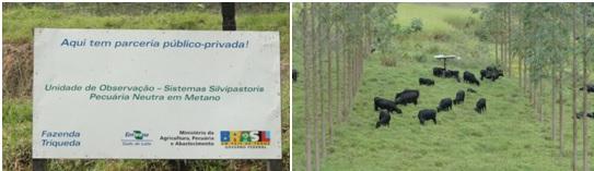 Fotos do Projeto Carne Carbono Neutro na Fazenda Triqueda, Coronel Pacheco-MG