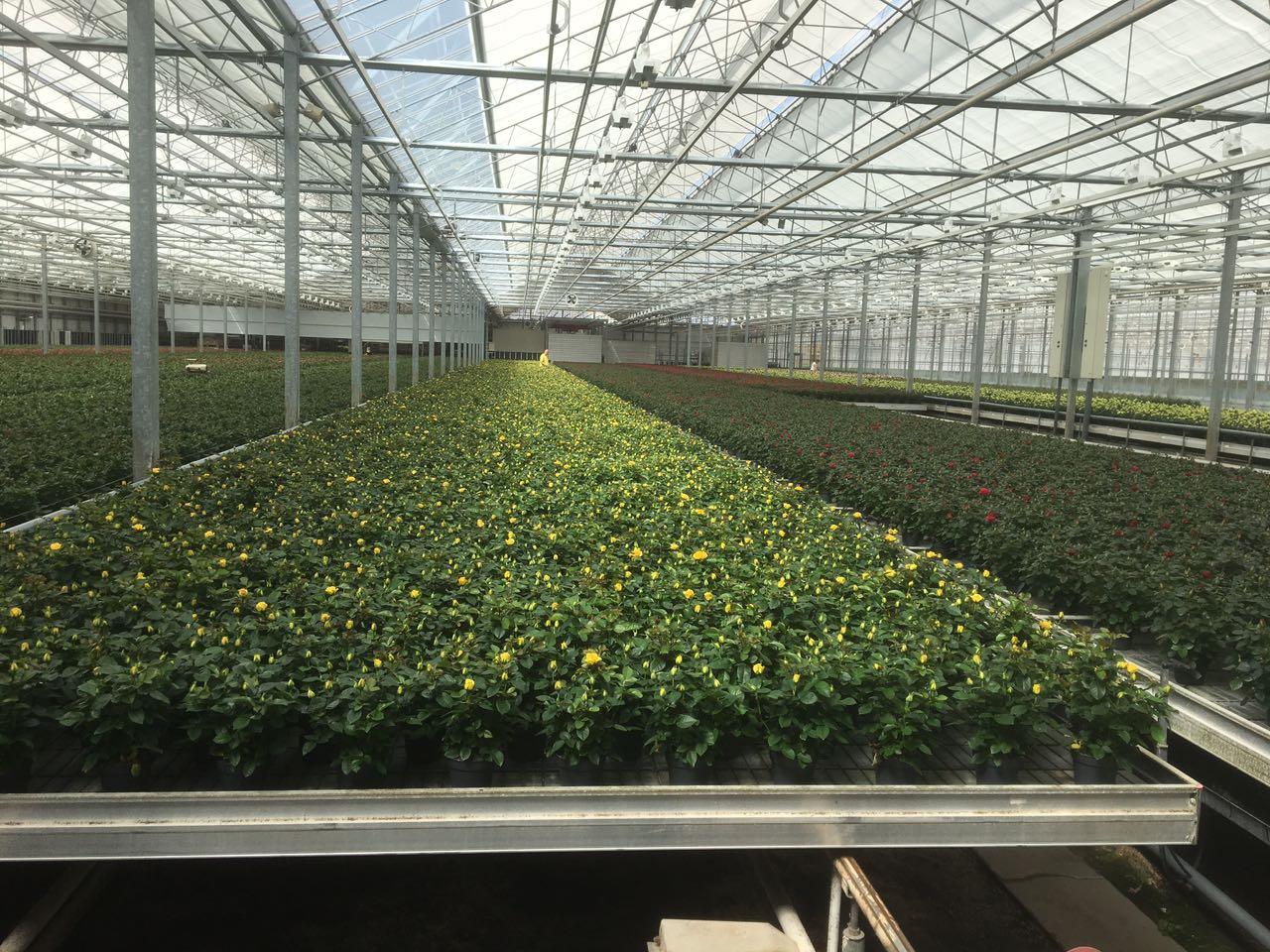 Produção de mudas e flores