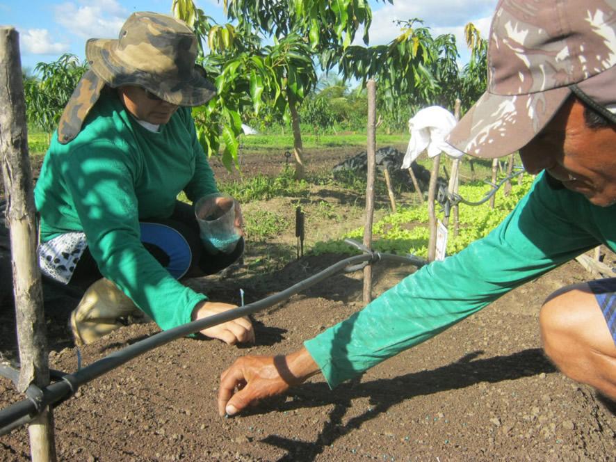 Agricultores semeando alface crespa. Foto: Flickr/ Orgânicos do Pivas (Creative Commons)